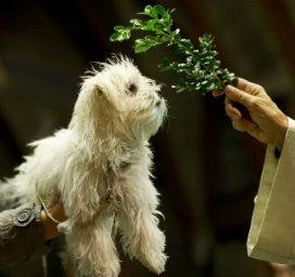 Zorg voor huisdieren in verzorgingshuis slecht geregeld