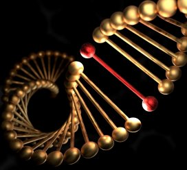 genoom.adobestock.jpg