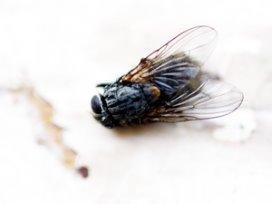 'Nog duizenden vliegen in muren van ziekenhuizen'