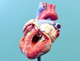 Thoraxchirurgen presenteren sterftecijfers