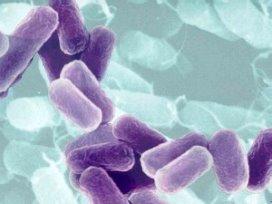 Gryphon lanceert anti-bacteriële barcodescanners voor zorg
