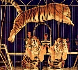 Circus van 100.000 euro voor GGZ WNB