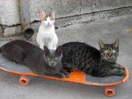 Den Helder heeft mantelzorg voor katten van ouderen