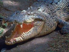 Abvakabo: 'Ziekenhuizen huilen krokodillentranen'