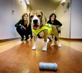 Hond kan ziekenhuisbacterie opsporen