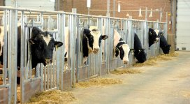 'Alle nieuwe antibiotica verbieden in veeteelt'