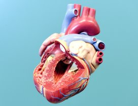 Ouderen overleven vaker hartinfarct door snelle dotter