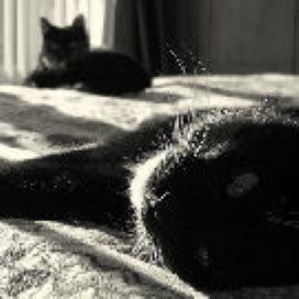 'Meer pret aan het bed'