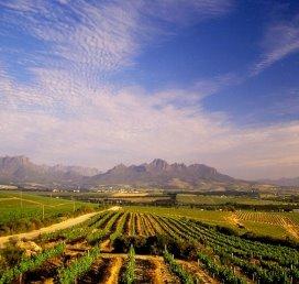 CZ verliest rechtszaak over zorg in Zuid-Afrika