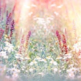 bloemen.istock.jpg