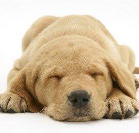 Huisdieren verlagen kans op hartklachten