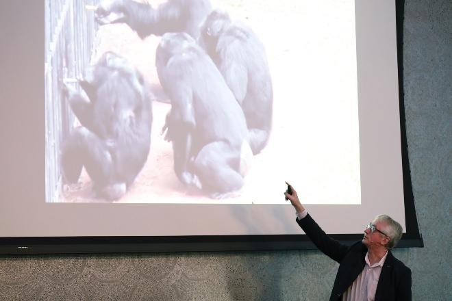 Chimpansees weten van elkaar met wie ze prettig samenwerken